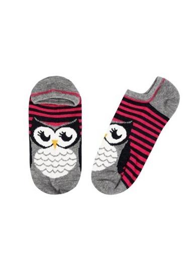 Çorap-Colin's